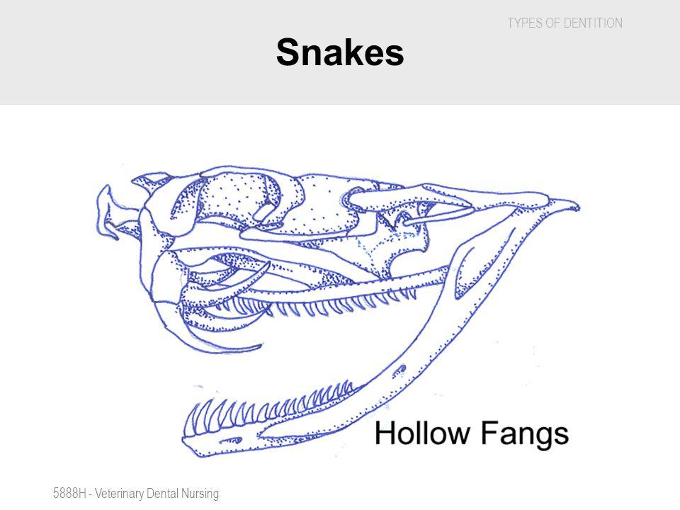 Snakes 5888H - Veterinary Dental Nursing