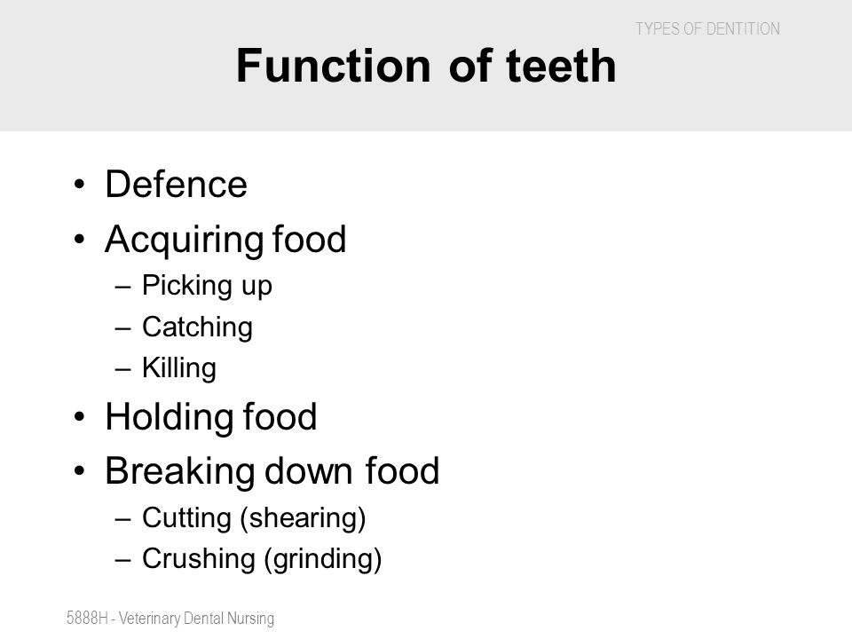 Function of teeth Defence Acquiring food Holding food