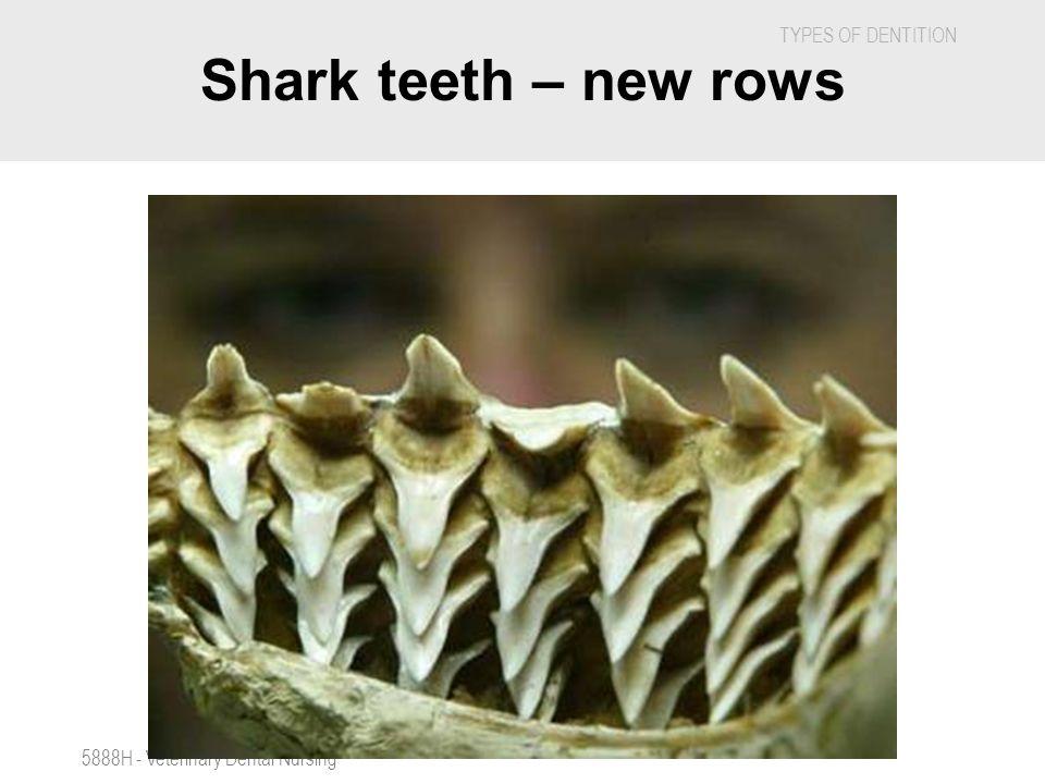 Shark teeth – new rows 5888H - Veterinary Dental Nursing