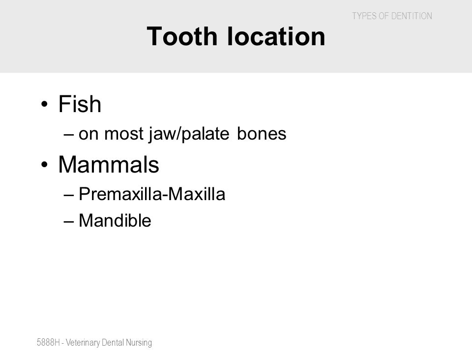 Tooth location Fish Mammals on most jaw/palate bones