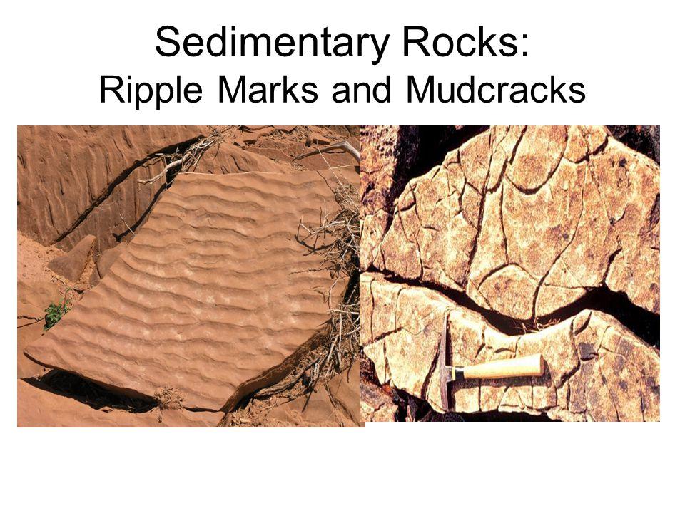 Sedimentary Rocks: Ripple Marks and Mudcracks