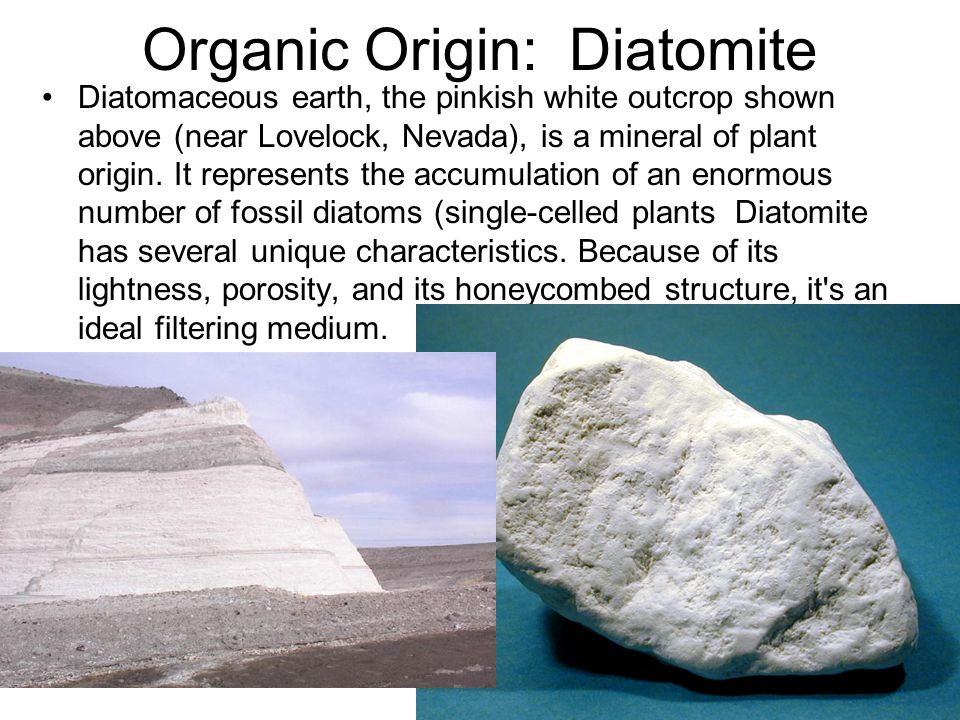Organic Origin: Diatomite