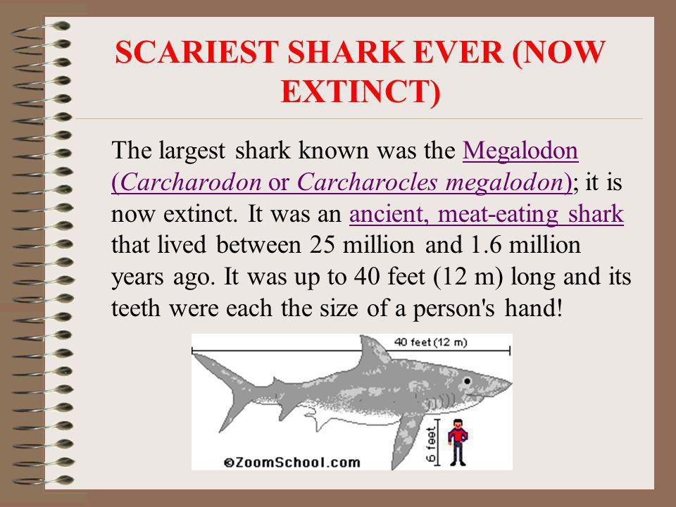 SCARIEST SHARK EVER (NOW EXTINCT)