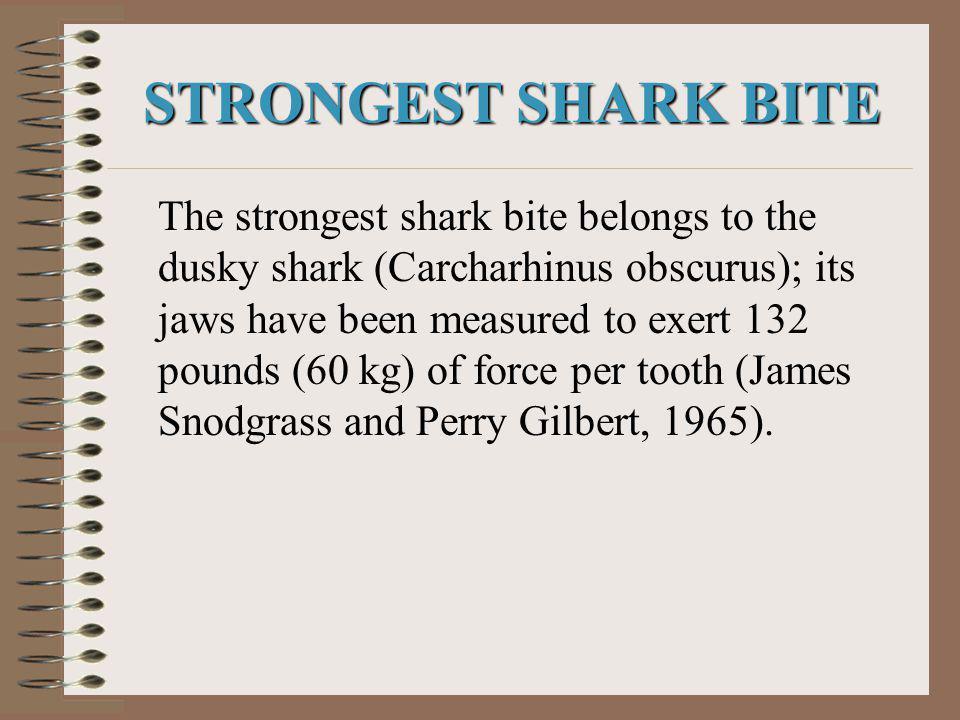 STRONGEST SHARK BITE