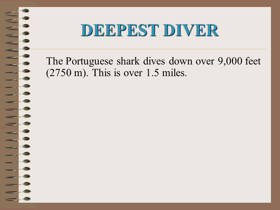 DEEPEST DIVER The Portuguese shark dives down over 9,000 feet (2750 m). This is over 1.5 miles.
