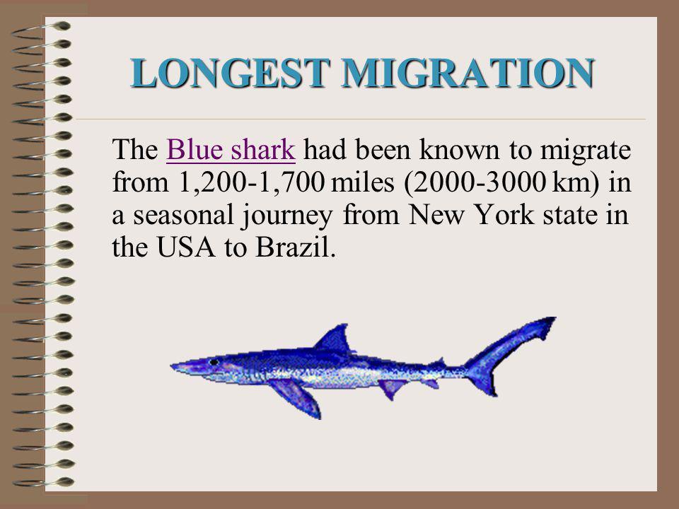 LONGEST MIGRATION