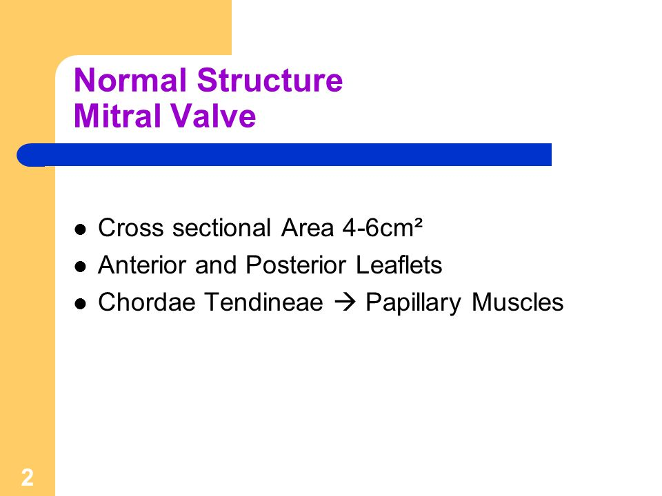 Normal Structure Mitral Valve