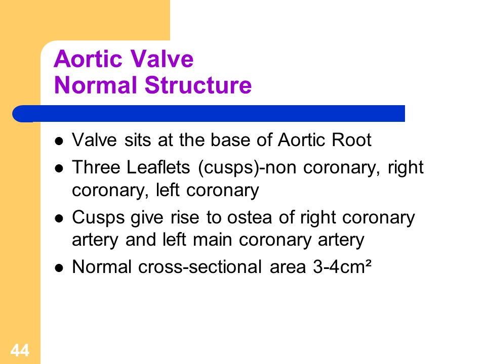 Aortic Valve Normal Structure