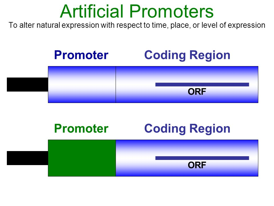 Artificial Promoters Promoter Coding Region Promoter Coding Region ORF