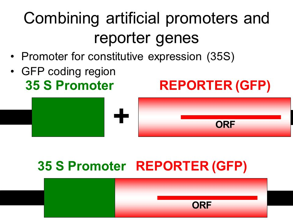 Combining artificial promoters and reporter genes
