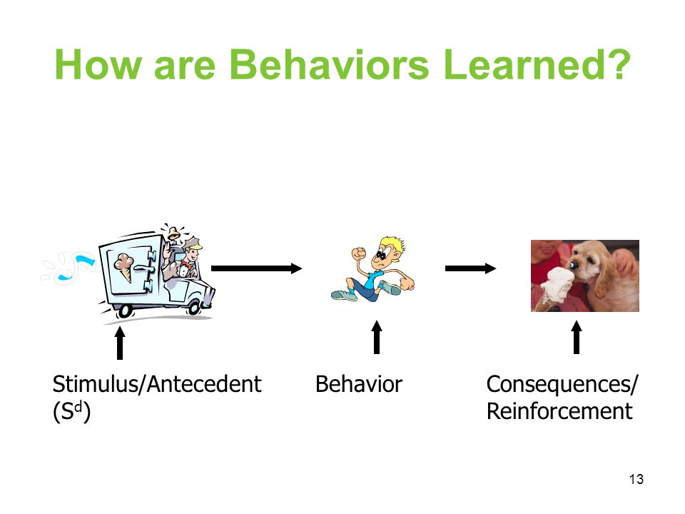 How are Behaviors Learned