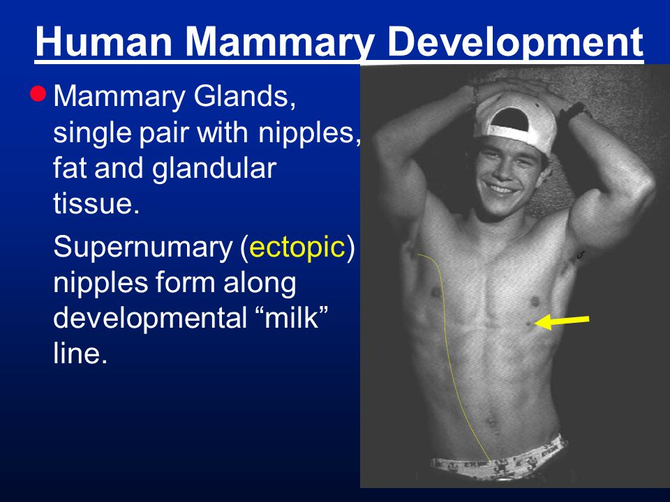 Human Mammary Development