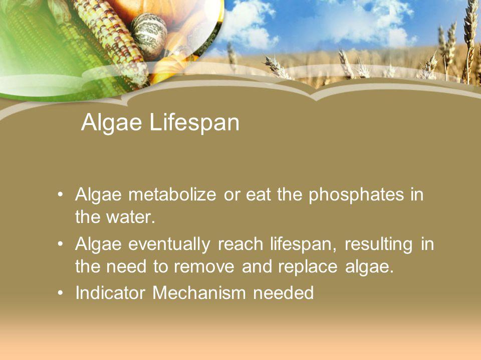 Algae Lifespan Algae metabolize or eat the phosphates in the water.