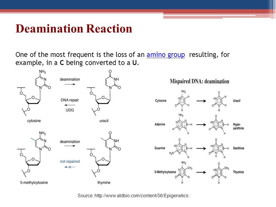 Source: http://www.atdbio.com/content/56/Epigenetics: