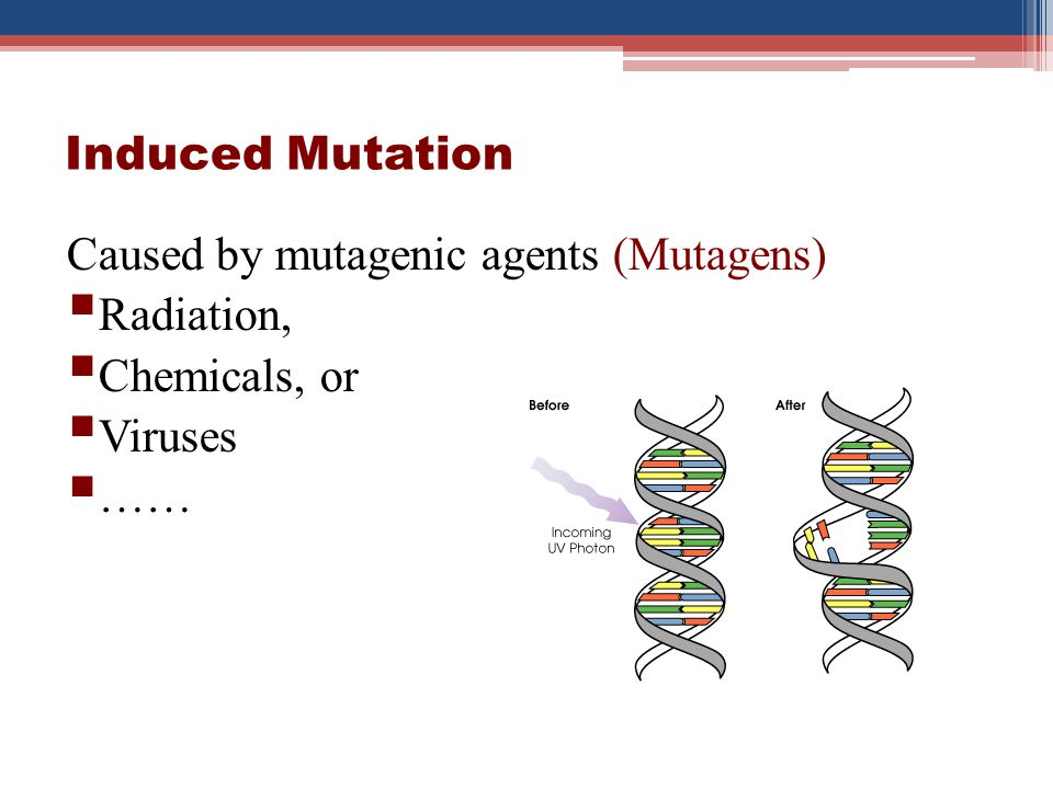 Induced Mutation Caused by mutagenic agents (Mutagens) Radiation, Chemicals, or Viruses ……