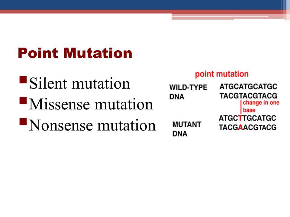 Point Mutation Silent mutation Missense mutation Nonsense mutation