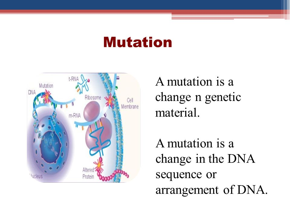 Mutation A mutation is a change n genetic material.