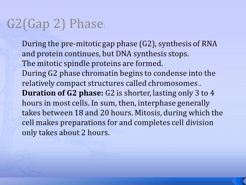 G2(Gap 2) Phase: