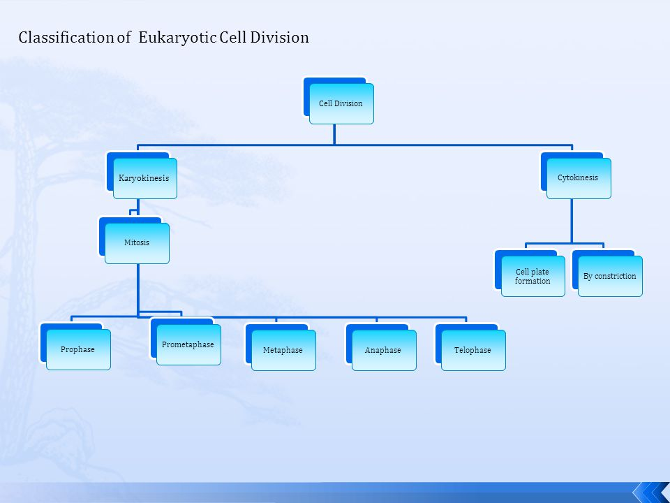 Classification of Eukaryotic Cell Division