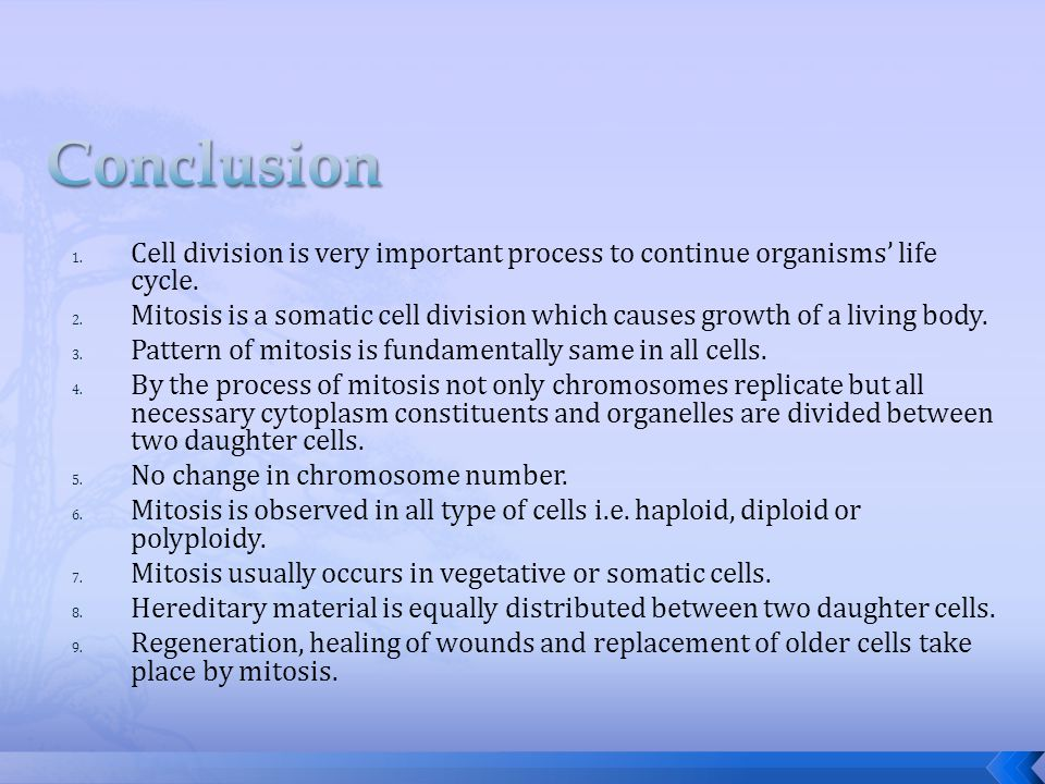 Conclusion Cell division is very important process to continue organisms' life cycle.