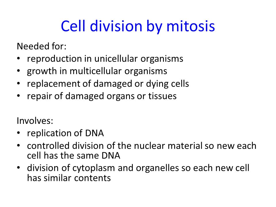 Cell division by mitosis
