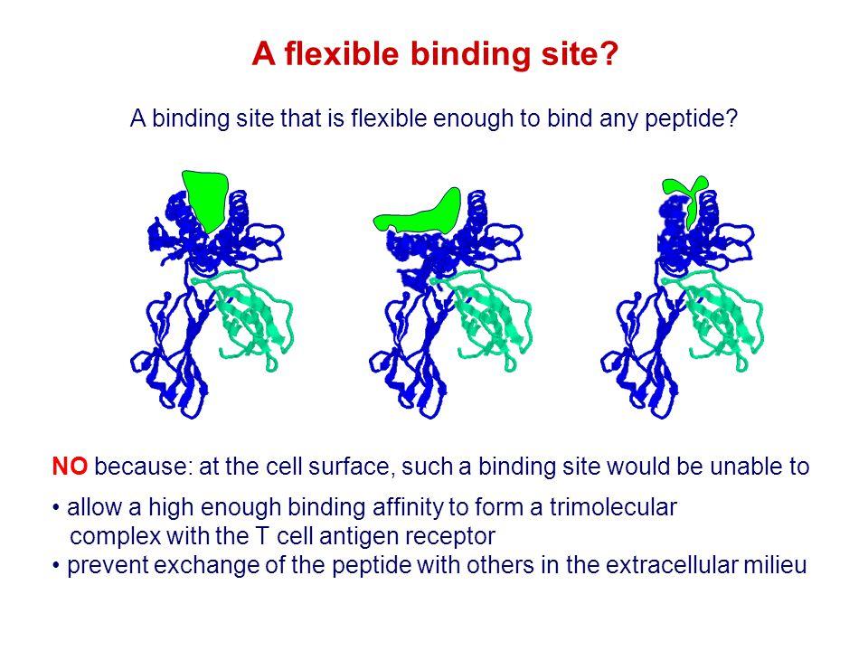 A flexible binding site