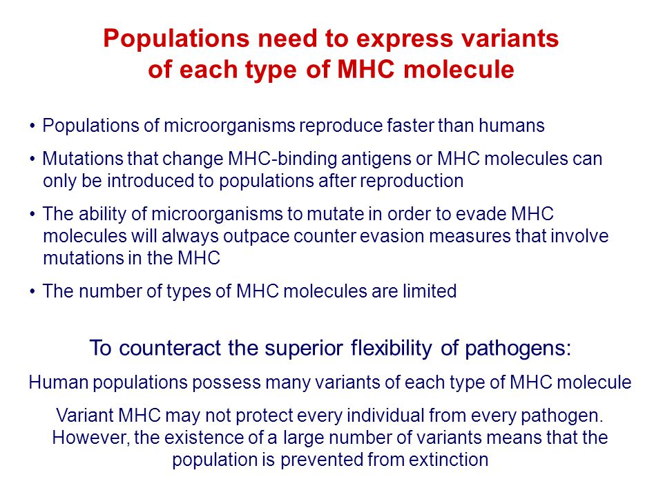 Populations need to express variants of each type of MHC molecule