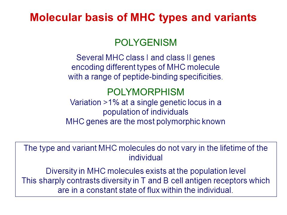 Molecular basis of MHC types and variants