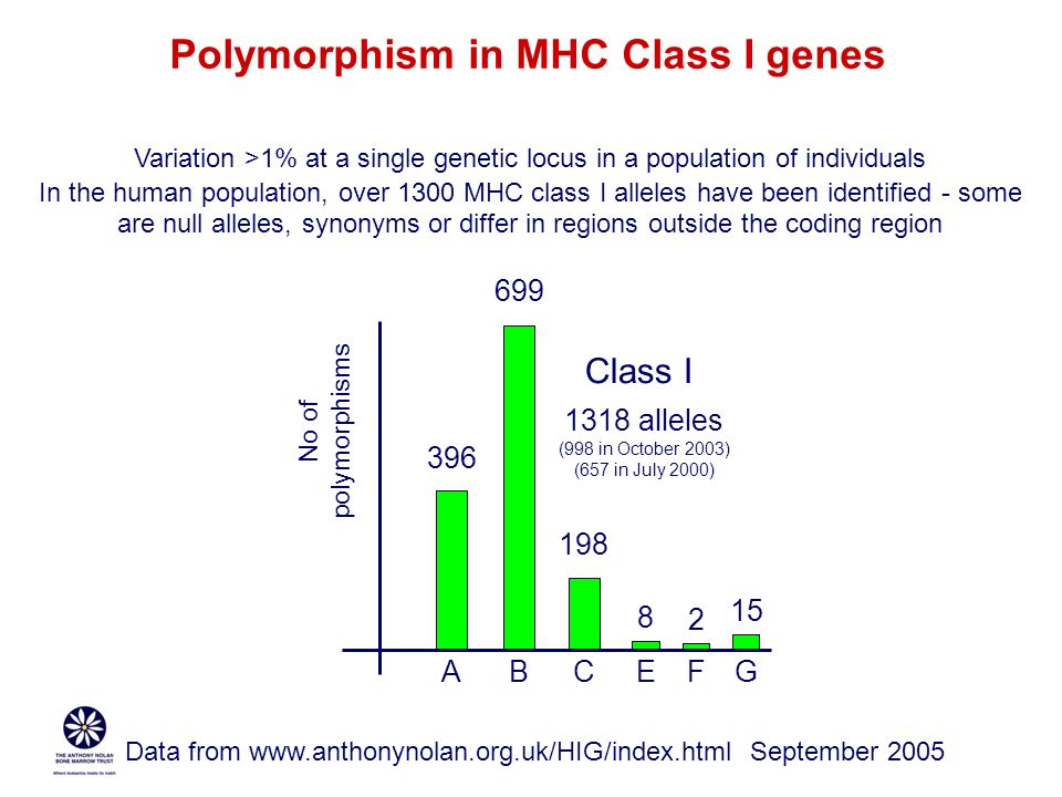 Polymorphism in MHC Class I genes