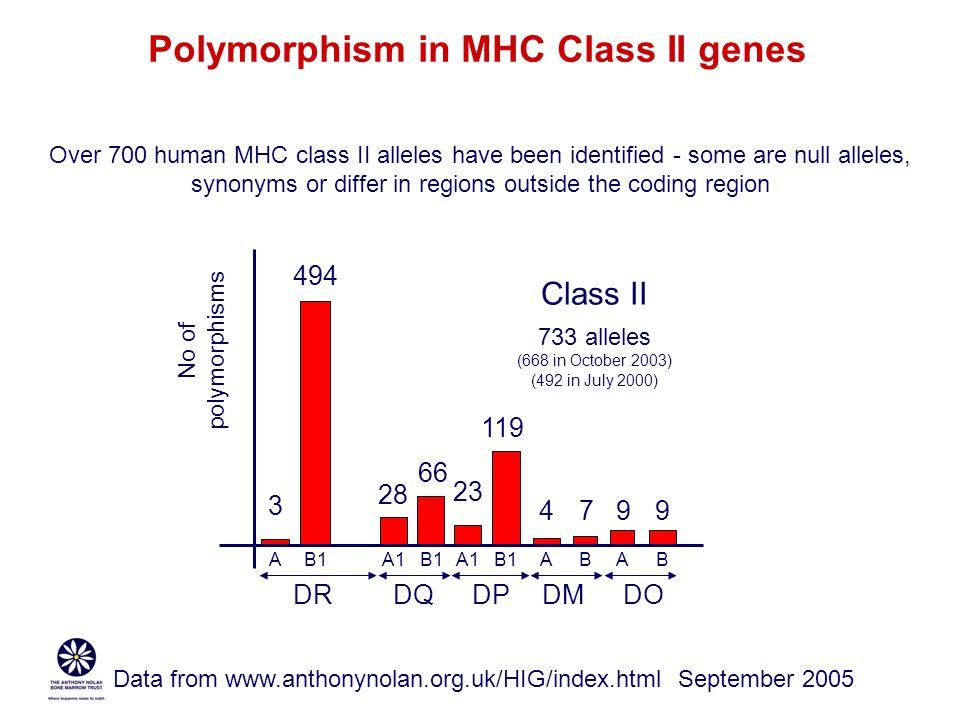 Polymorphism in MHC Class II genes