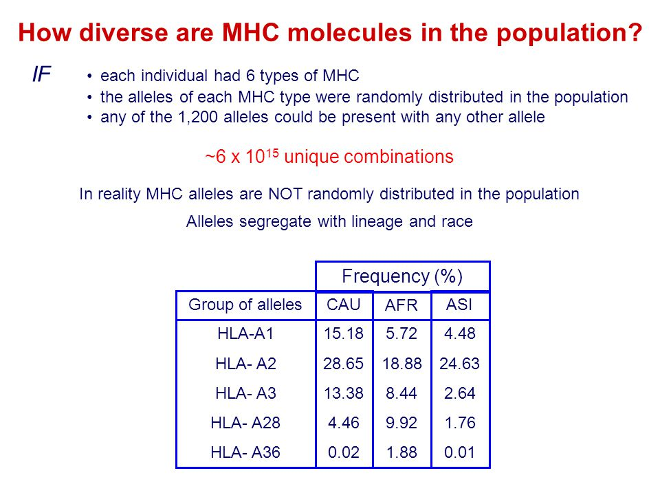 How diverse are MHC molecules in the population