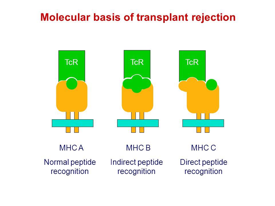 Molecular basis of transplant rejection