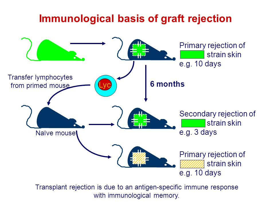 Immunological basis of graft rejection