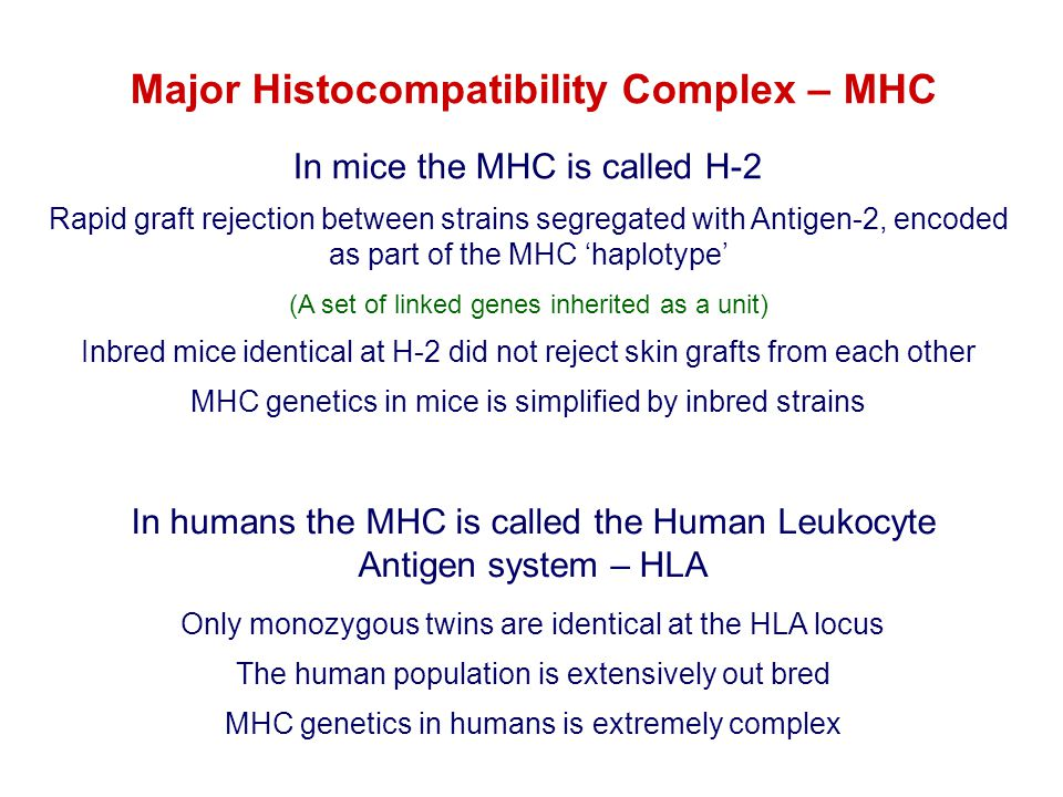 Major Histocompatibility Complex – MHC