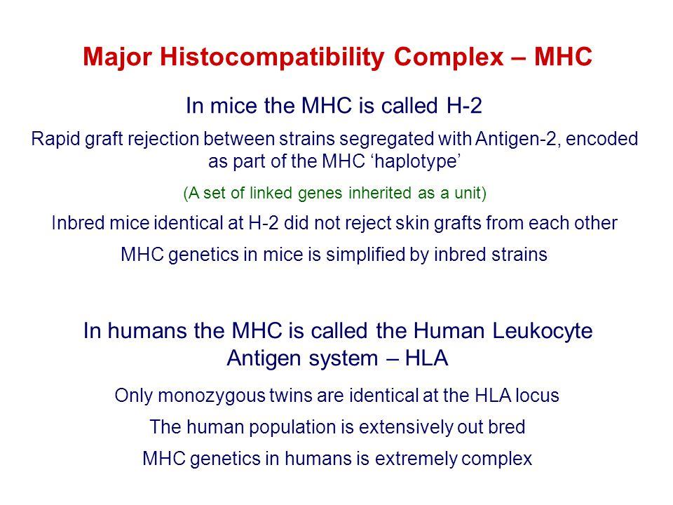 Major Histocompatibility Complex – MHC