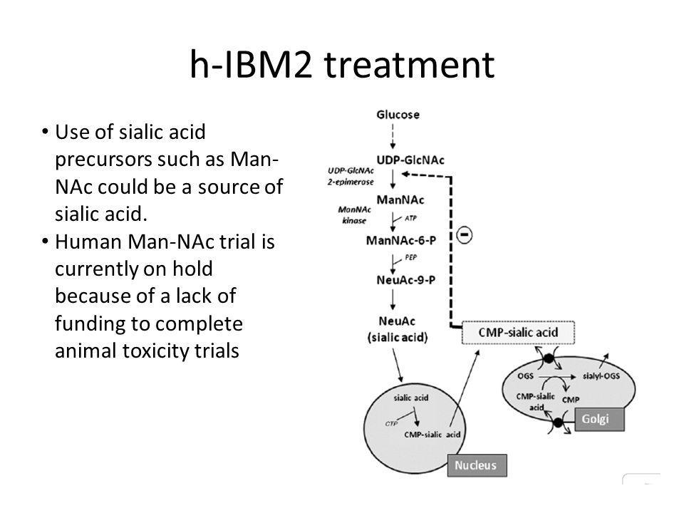 h-IBM2 treatment Use of sialic acid precursors such as Man-NAc could be a source of sialic acid.