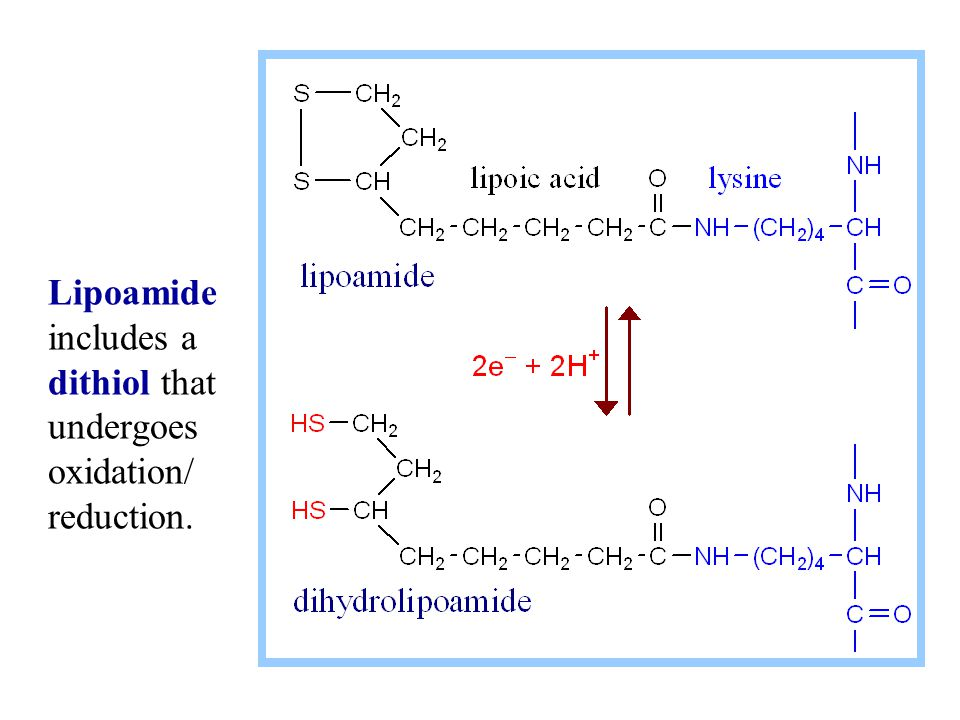 Lipoamide includes a dithiol that undergoes oxidation/ reduction.