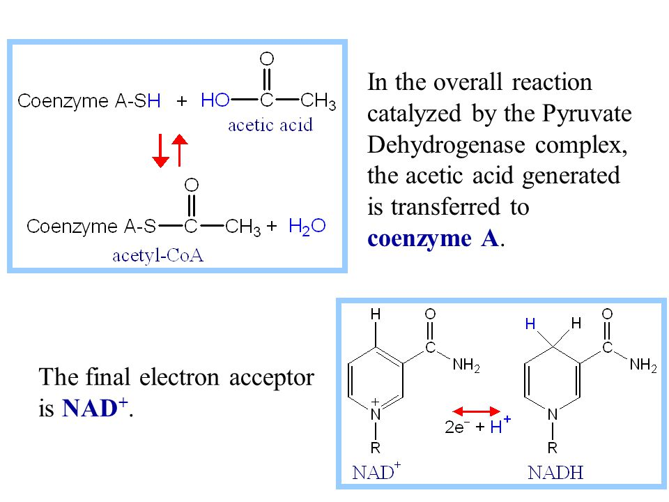 In the overall reaction catalyzed by the Pyruvate Dehydrogenase complex, the acetic acid generated is transferred to coenzyme A.