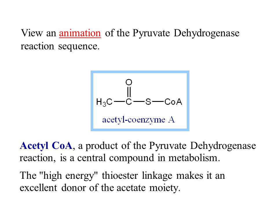 View an animation of the Pyruvate Dehydrogenase reaction sequence.