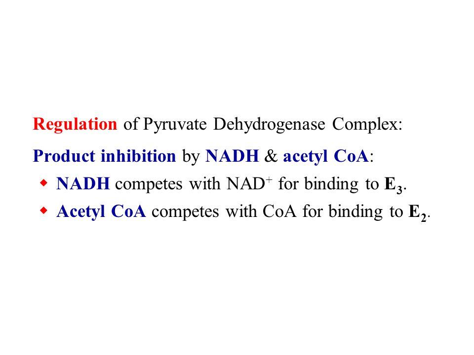Regulation of Pyruvate Dehydrogenase Complex: