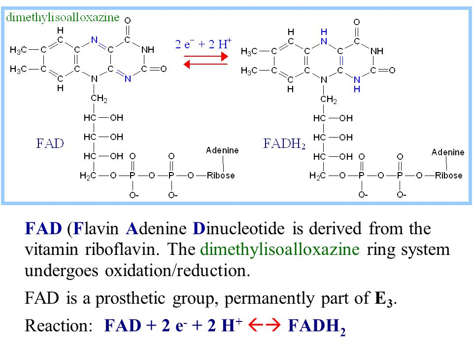 FAD (Flavin Adenine Dinucleotide is derived from the vitamin riboflavin. The dimethylisoalloxazine ring system undergoes oxidation/reduction.