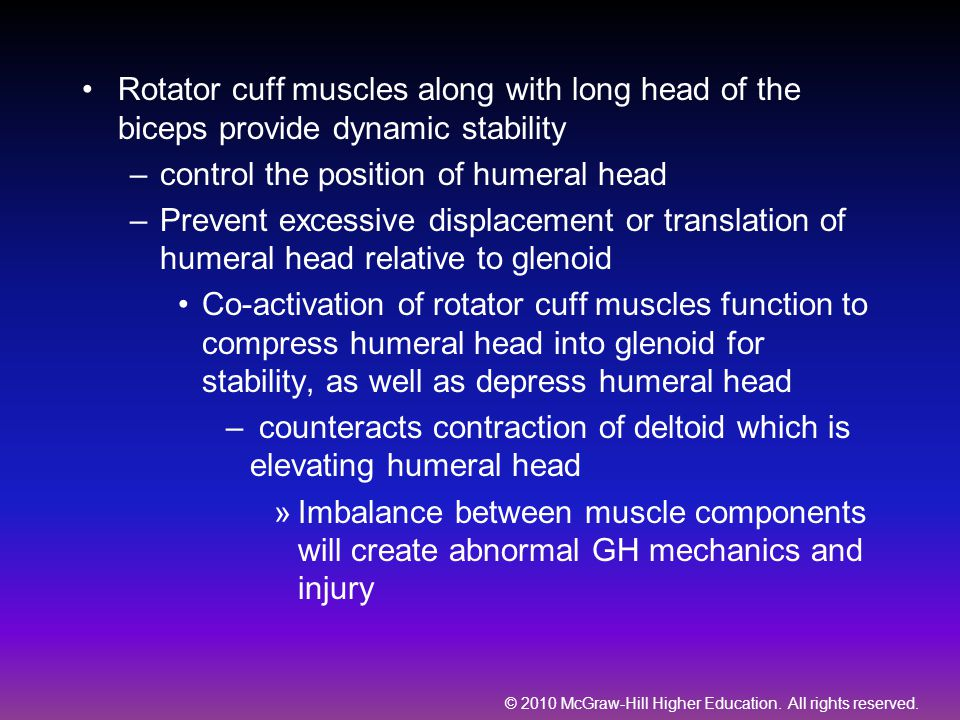 Rotator cuff muscles along with long head of the biceps provide dynamic stability