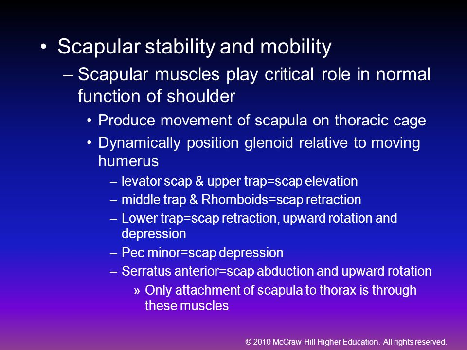 Scapular stability and mobility