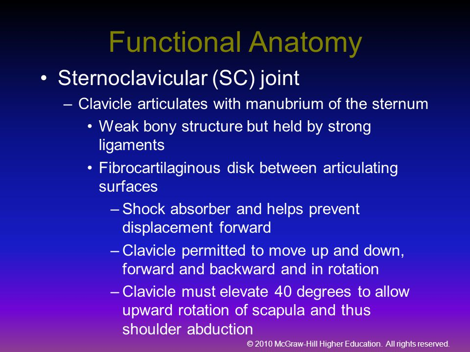 Functional Anatomy Sternoclavicular (SC) joint