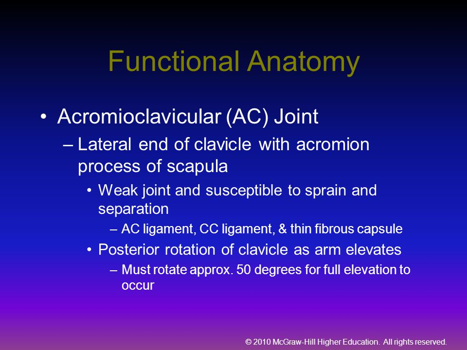 Functional Anatomy Acromioclavicular (AC) Joint