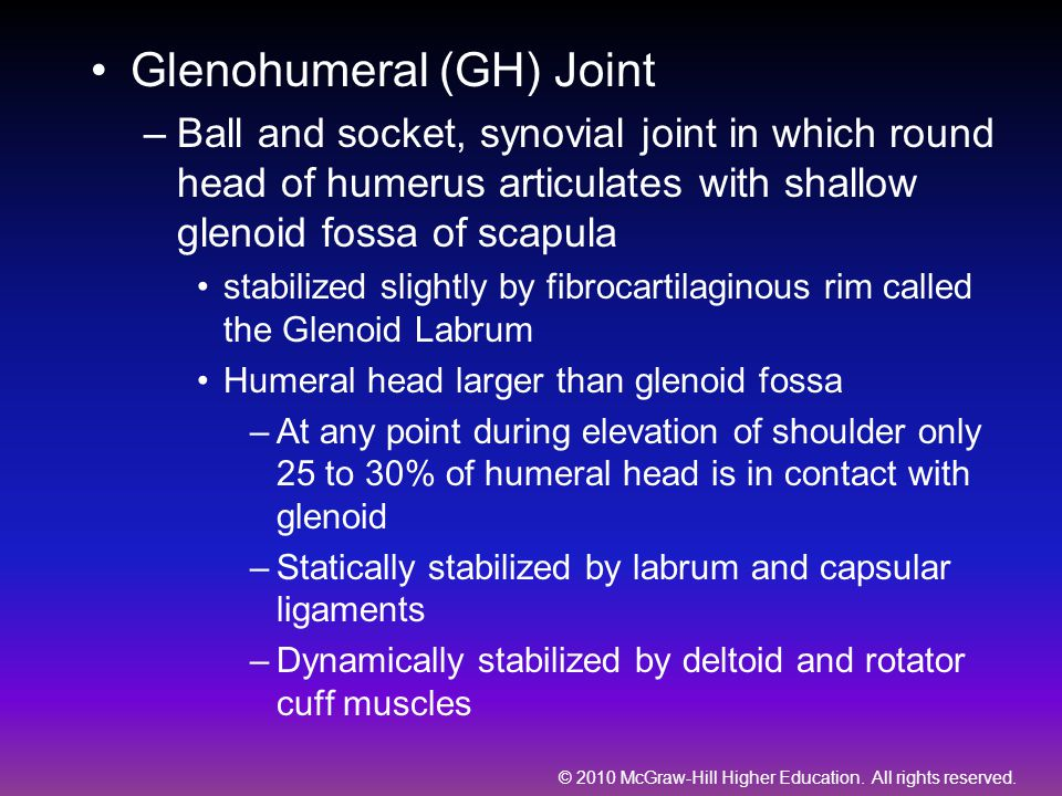 Glenohumeral (GH) Joint