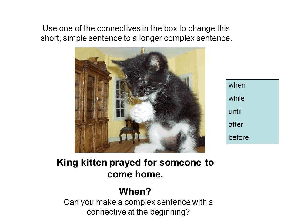 King kitten prayed for someone to come home.