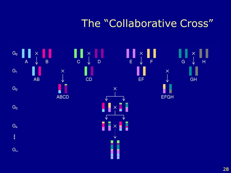 The Collaborative Cross
