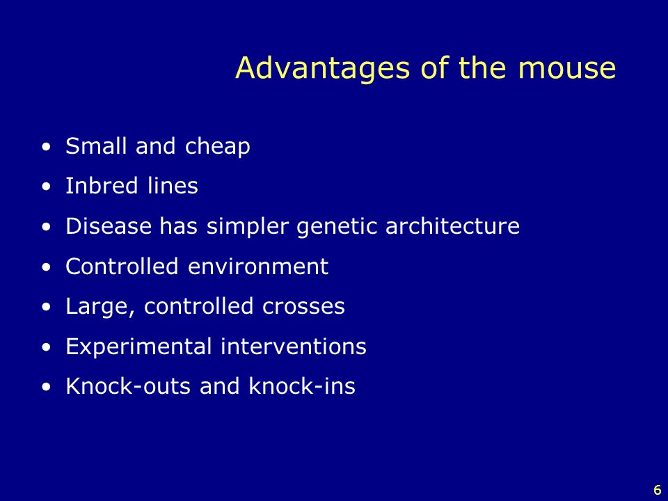 Advantages of the mouse