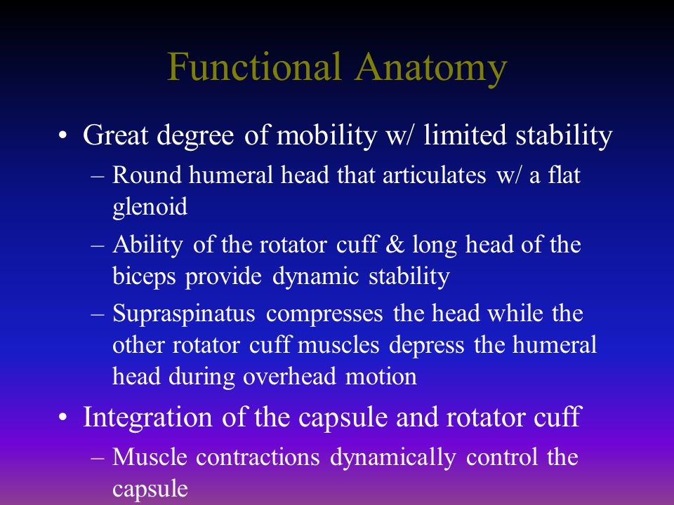 Functional Anatomy Great degree of mobility w/ limited stability